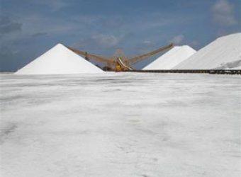 Salt Dunes, Gray Flamingos and the Dutch West Indies