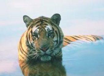 Kanha National Park – Tiger Reserve