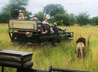 lion-jeep2
