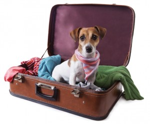 Tips for Traveling with Pets This Summer